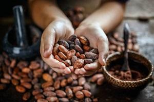 Recette du lait végétal de fève de cacao maison